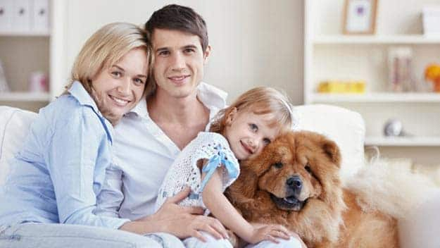 Wills & Trusts dog-young-family Direct Wills Stanley